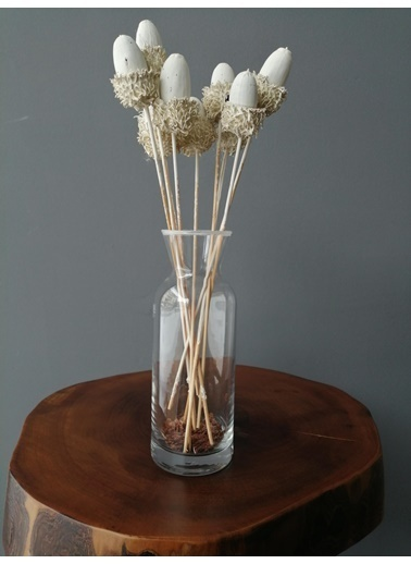 Kuru Çiçek Deposu Beyaz Pelit 6 Adet , Kuru Çiçek Beyaz